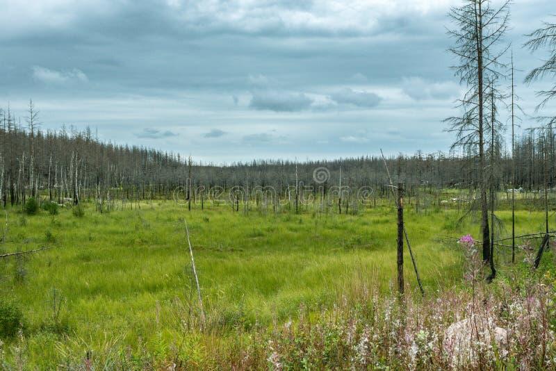Sikt av naturen som återställer från en skogsbrand arkivfoton