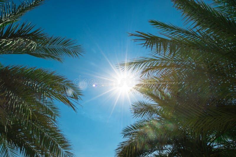 Sikt av palmbladen och solen på den klara blåa himlen royaltyfria foton