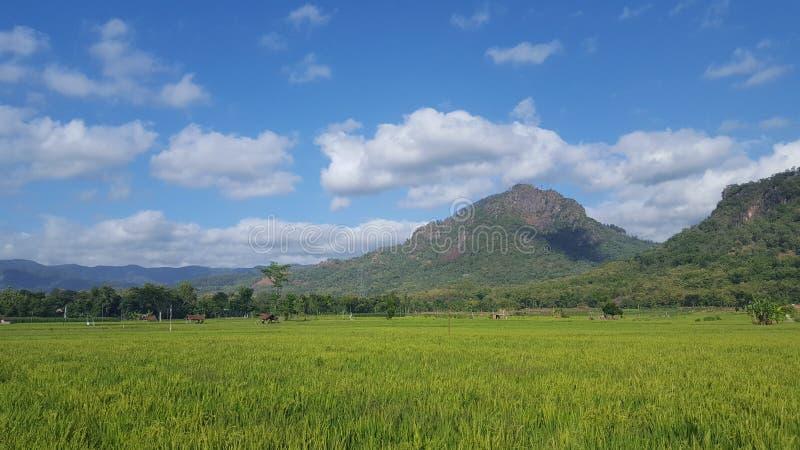 Sikt av risfält i jordbruksområden med risfält och bergiga bakgrunder royaltyfri foto