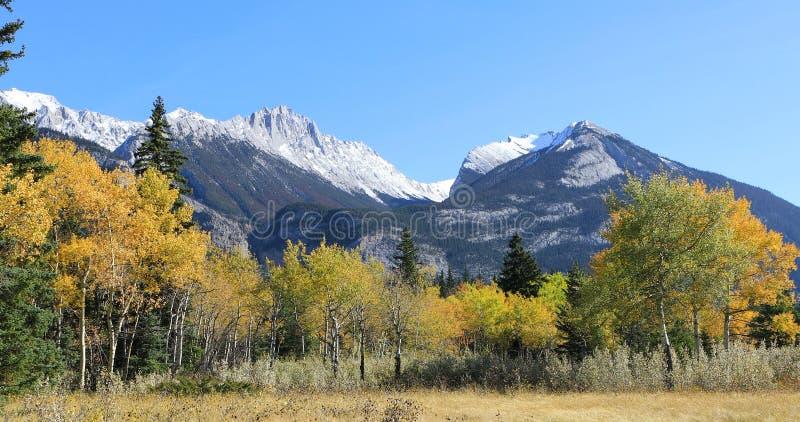 Sikt av Rocky Mountain med guld- aspar arkivfoto