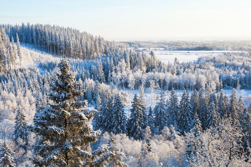 Sikt av skoglandskapet royaltyfri fotografi