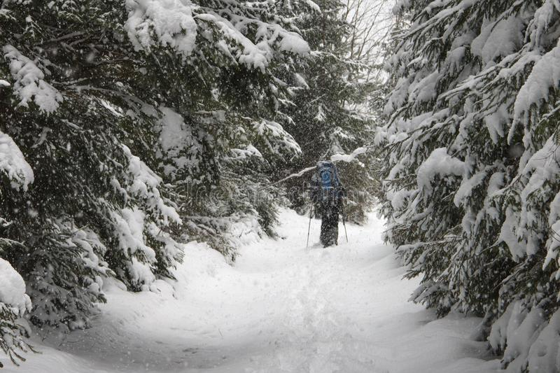 Sikt av snö-täckte barrträdträd och fotvandraren för djup insnöad vinterskog ensamma med en ryggsäck som promenerar slingan arkivbild