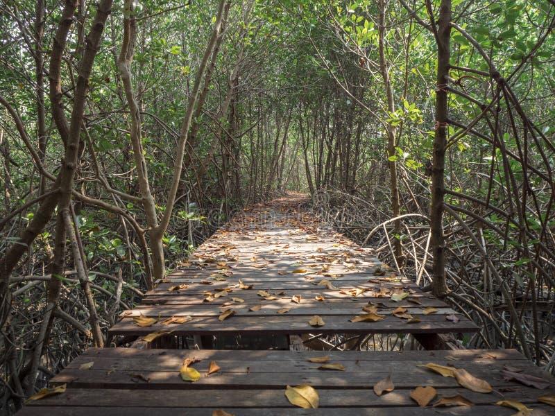 Sikt av träbron i mangroveskogen, Phetchaburi, Thailand fotografering för bildbyråer