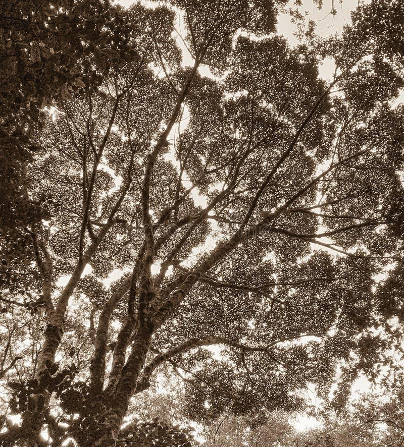 Sikt av trädmarkisen royaltyfri foto