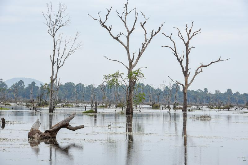 Sikt av vallgraven med döda träd arkivfoto