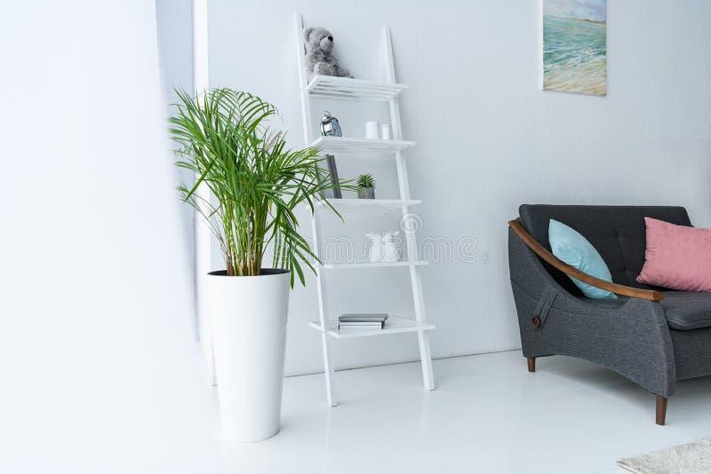 sikt av vardagsrum med den mörka soffan, hyllor och den gröna växten i blomkruka royaltyfri foto