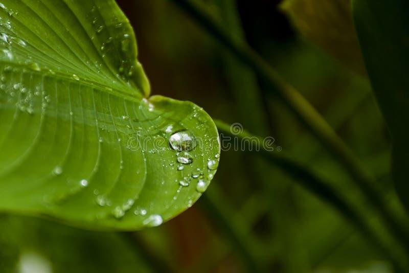 Sikt av vattendroppar på gröna sidor, når att ha regnat royaltyfri fotografi