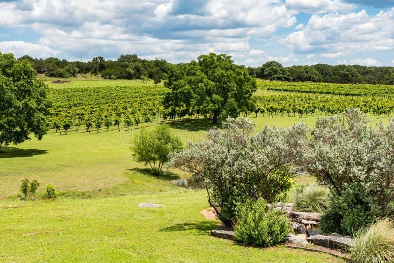 Sikt av vingården i avståndet royaltyfria foton