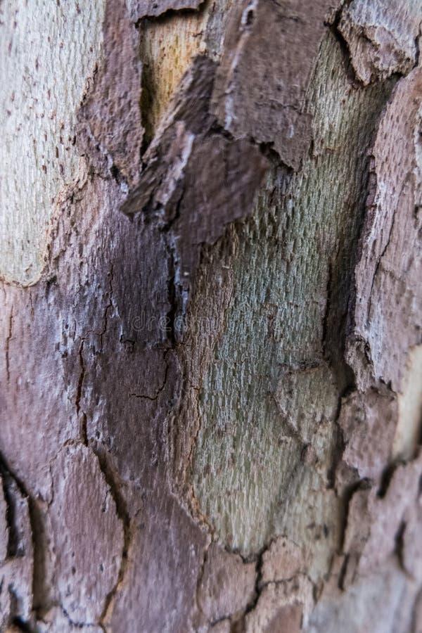 Sikt för detalj för trädskäll arkivfoto