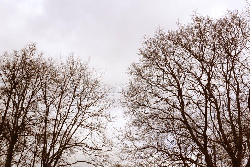 Sikt för djungelskogträd i höstvintersäsong med filialer utan sidor på en parkera i för himmelnatur för molnig dag en grå tappnin royaltyfri bild