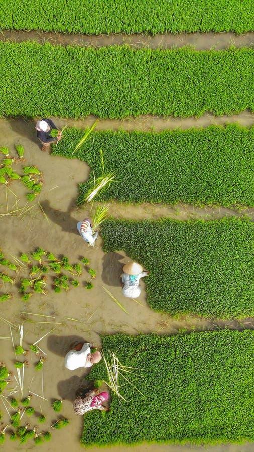 Sikt för hög vinkel av bönder som arbetar på jordbruks- fält arkivfoto