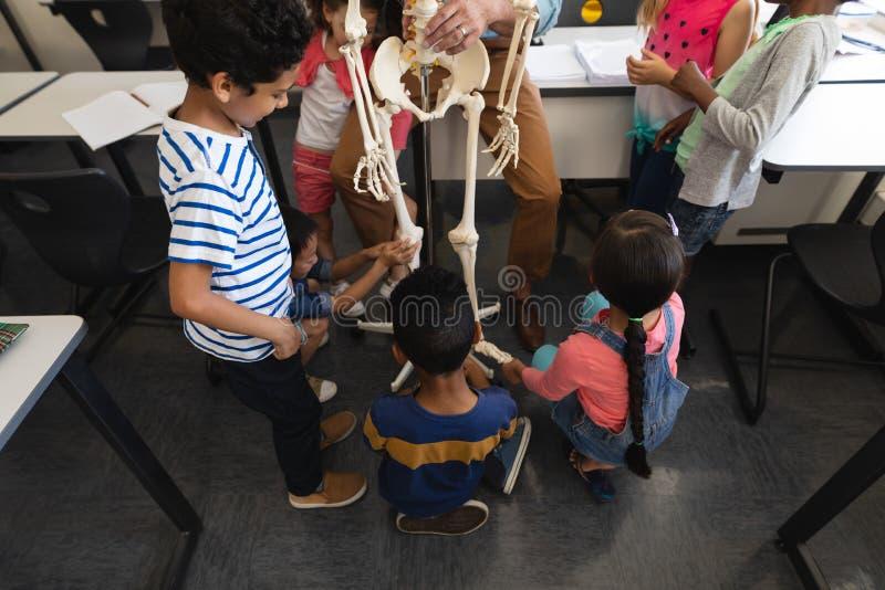 Sikt för hög vinkel av skolbarn som lär anatomi av det mänskliga skelettet i klassrum fotografering för bildbyråer
