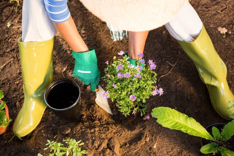 Sikt för hög vinkel av trädgårdsmästaren som använder mursleven för att plantera på trädgården arkivfoto