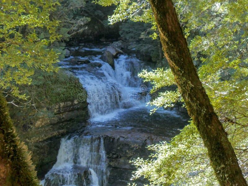 Sikt för hög vinkel till och med bokträdträd av D-'altonvattenfall royaltyfria foton