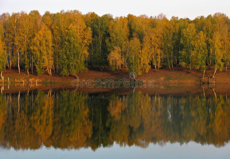 Download Sikt för höstskoglake arkivfoto. Bild av cistern, förträffligt - 275994