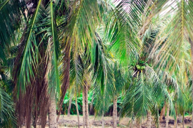 Sikt för kokosnötpalmträdperspektiv från högt övre för golv royaltyfri bild