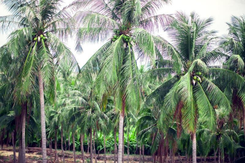 Sikt för kokosnötpalmträdperspektiv från högt övre för golv arkivfoton