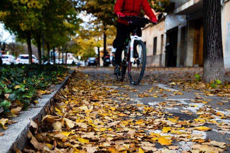 Sikt för låg vinkel av en cykelväg med höstblad arkivfoton