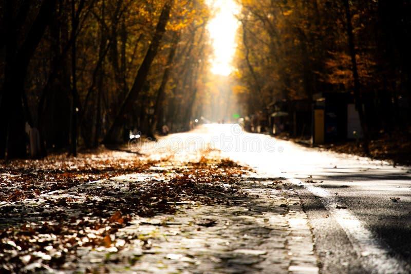 Sikt för låg vinkel av en höstväg med solnedgångljus arkivfoto