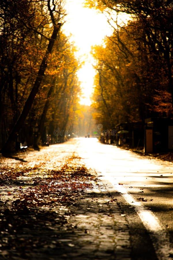 Sikt för låg vinkel av en höstväg med solnedgångljus arkivbilder