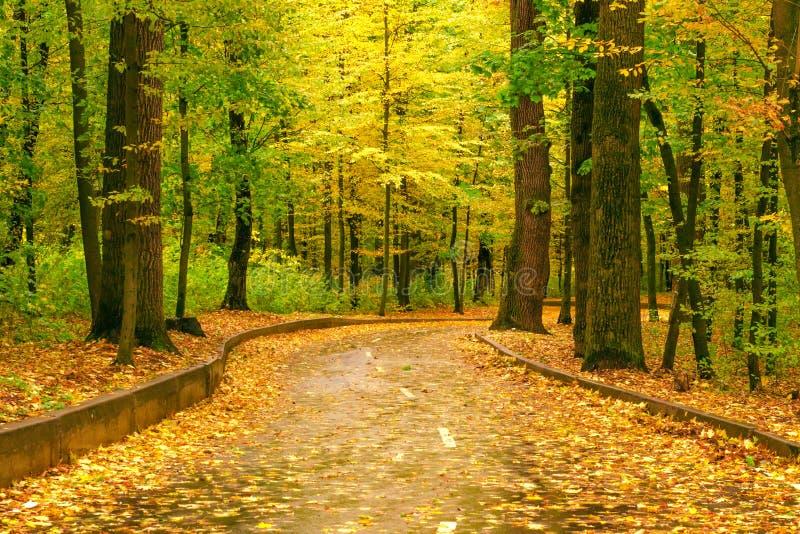Sikt för landskap för höstträdväg royaltyfri bild