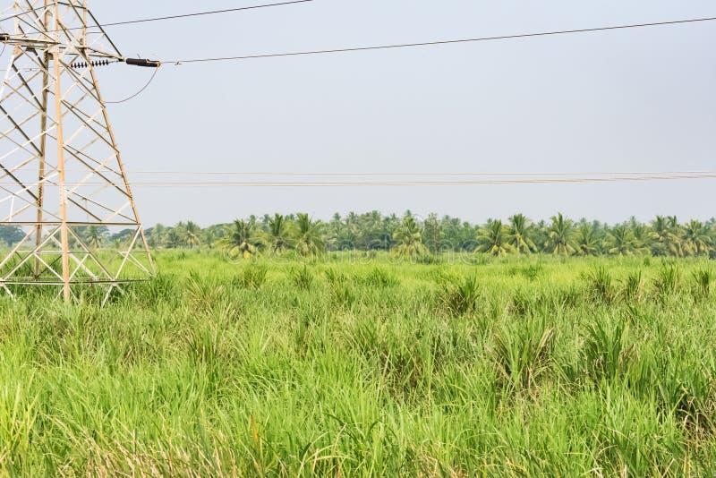 Sikt för slut för fält för lantbruk för sockerrotting som ser enorm fotografering för bildbyråer