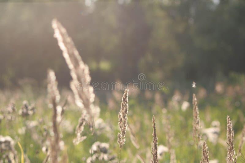 sikt för sommar för vinkelfältgräs wide royaltyfri bild