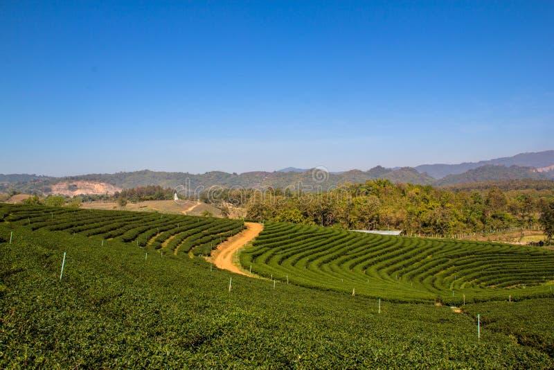 Sikt för tefältlandskap arkivbild