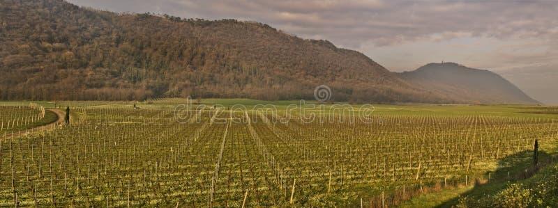 Sikt för vingårdpanoramafält på Italien royaltyfria foton