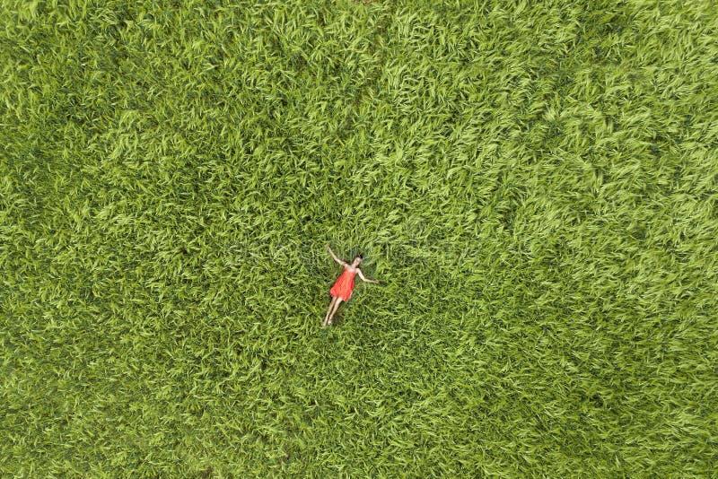 Sikt från över av den unga attraktiva slanka kvinnan i röd klänning som lägger med stängda ögon i grönt vetefält arkivfoton