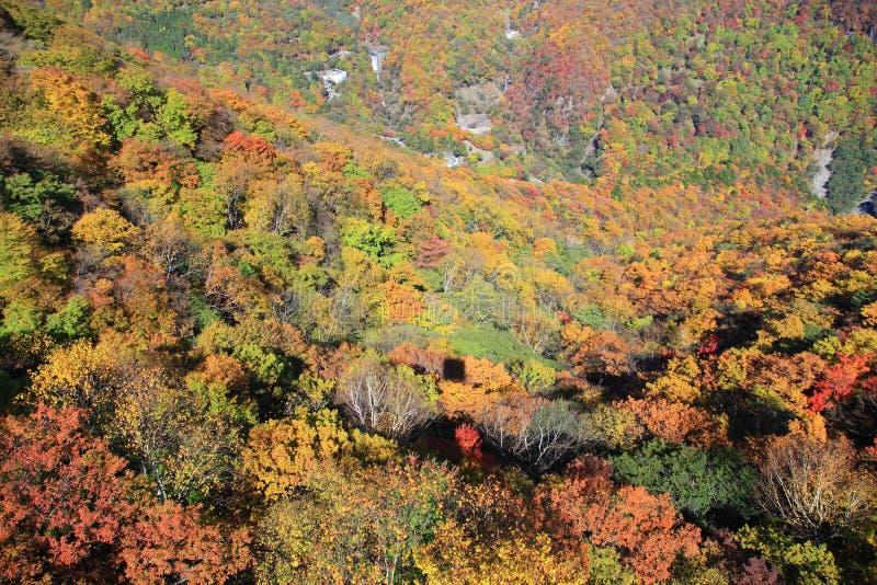 Sikt från den Akechidaira ropewayen Nikko Japan. fotografering för bildbyråer
