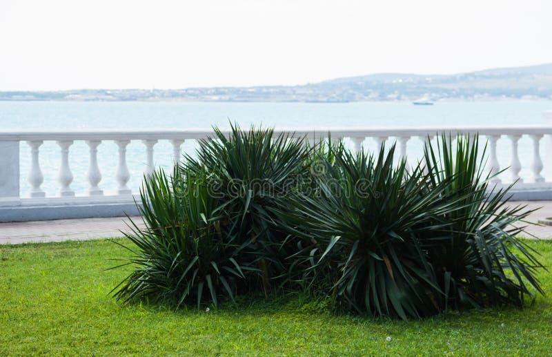 Sikt från den soliga promenaden med palmträd på den härliga kusten för havskust i staden Stentrottoar nära stranden och arkivbilder