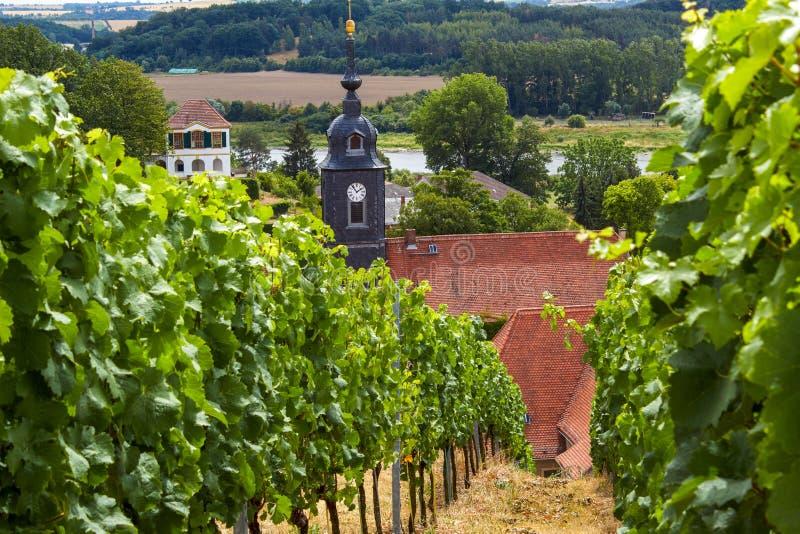 Sikt från vingården till den barocka slotten 'Seusslitz royaltyfri fotografi