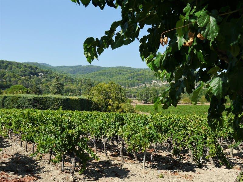 Sikt in i det bergiga landskapet av Provence, södra Frankrike, vingård i mitt av bilden, kulle i den suddiga bakgrunden, in royaltyfria foton