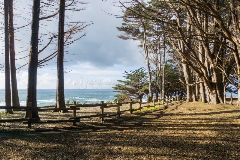 Sikt in mot Stilla havet från cypressskogen, Fitzgerald Marine Reserve, Moss Beach, Kalifornien royaltyfri fotografi