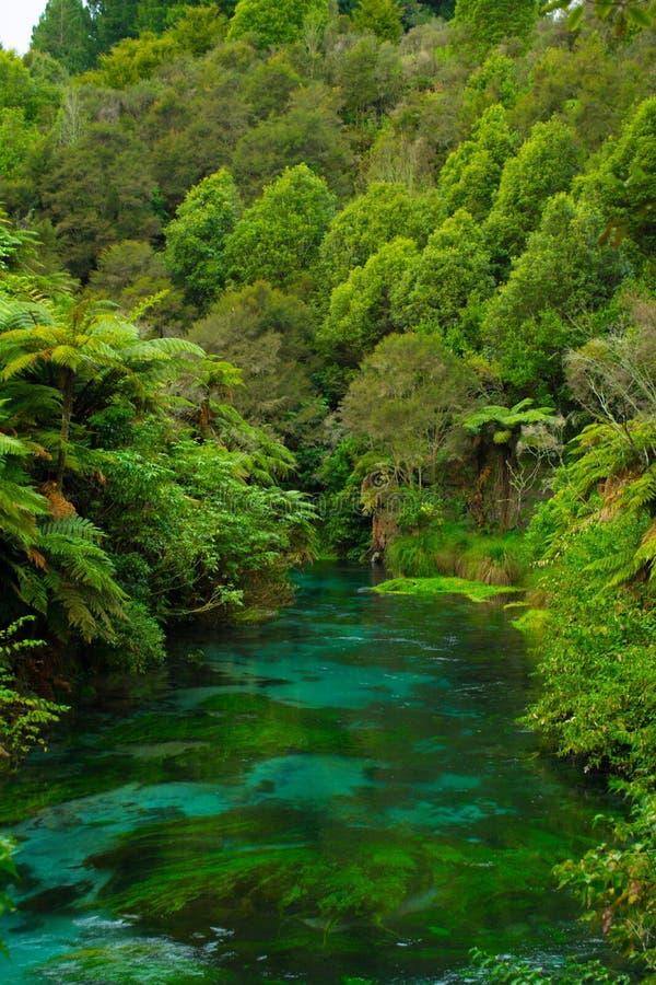 Sikt nedströms i mitt av den infödda busken royaltyfria foton