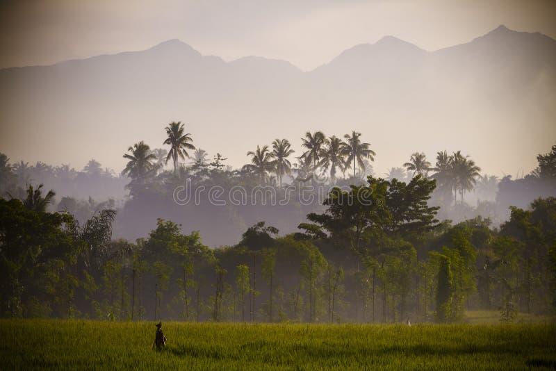 Sikt på den Rinjani vulkan i den Lombok ön, Indonesien. royaltyfria bilder