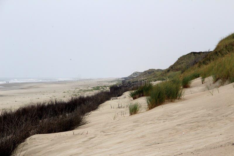 Sikt på en sanddyn och kulle på den nordliga havsöjuisten Tyskland royaltyfria bilder