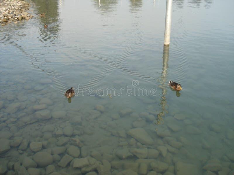 Sikt på en sjö arkivfoto