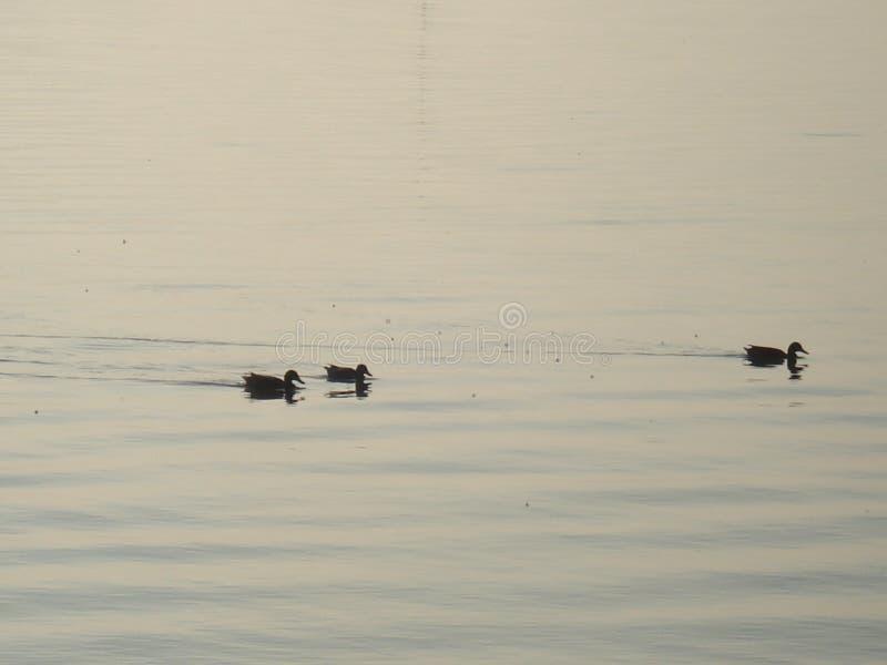 Sikt på en sjö fotografering för bildbyråer