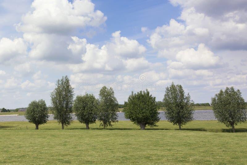 Sikt på ett typisk flodlandskap i Nederländerna En perfekt holländsk himmel med härliga moln, en rad av lock och grönt gräs royaltyfri foto