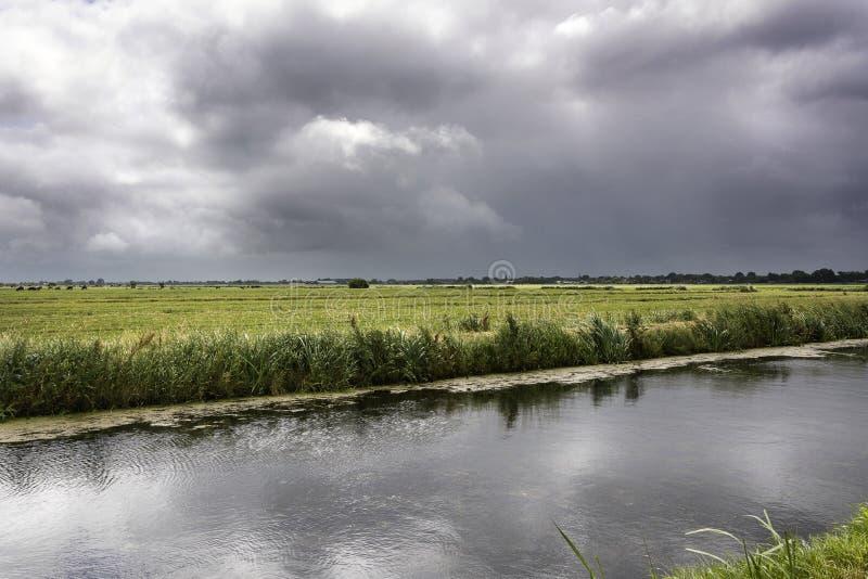 Sikt på ett typisk holländskt landskap i hjort för het Groene, landet i Randstaden av Nederländerna royaltyfria bilder