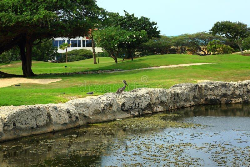 Sikt på fantastiskt naturligt landskap med en fågel och en liten flod arkivbilder