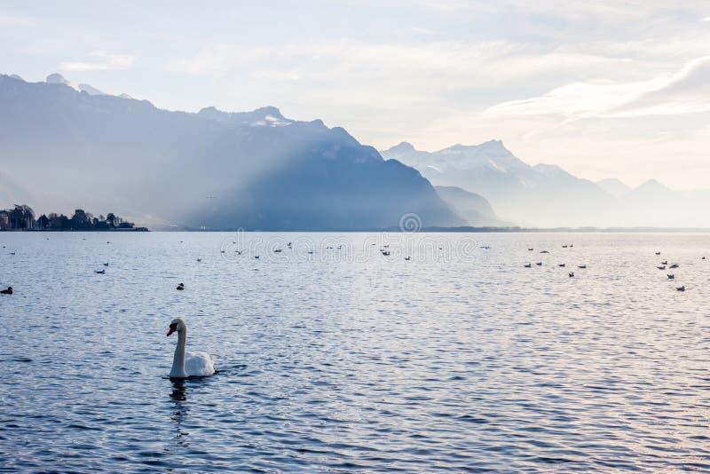 Sikt på fjällängar och Genève sjön royaltyfria bilder