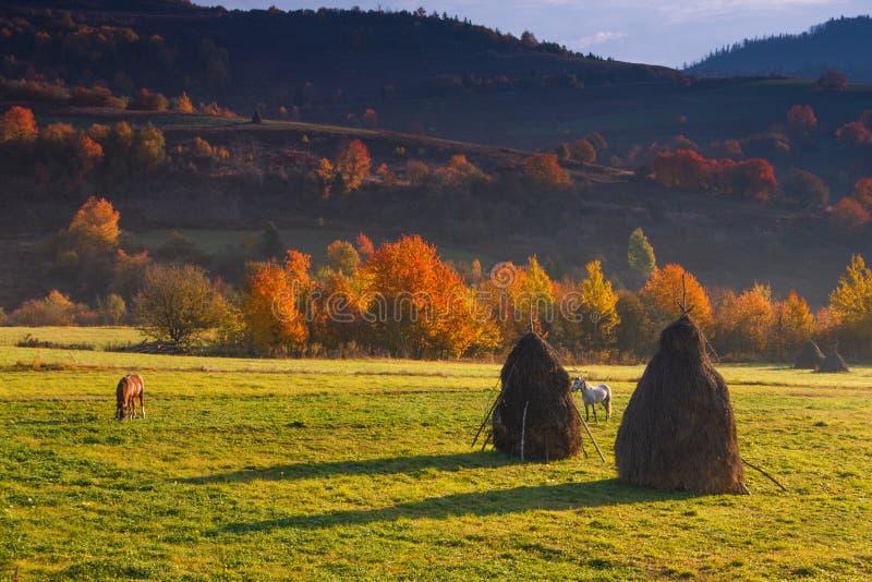 Sikt på höstbergdalar, träd med färgrika sidor och betande hästar royaltyfri fotografi
