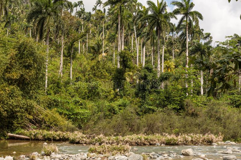 Sikt på nationalparkalejandroen de humboldt med flodKuba royaltyfri bild