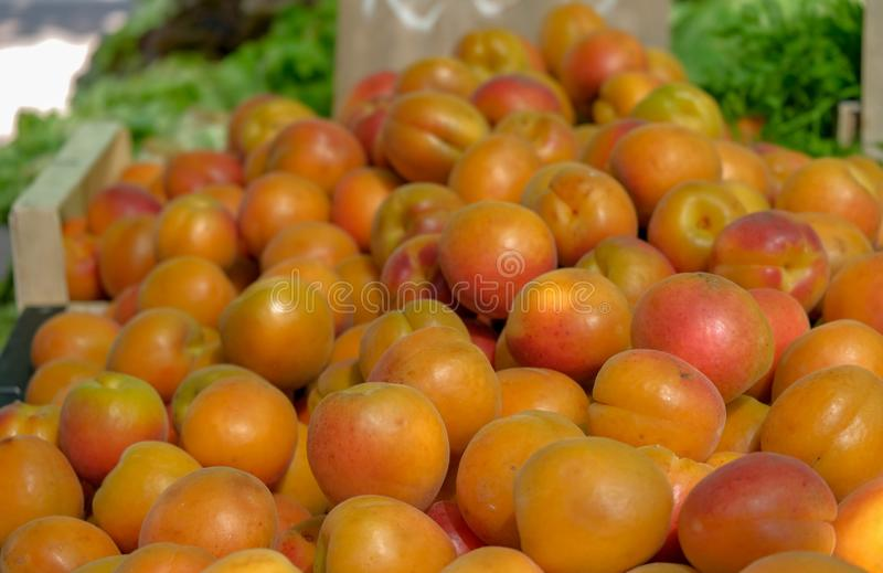Sikt på nya aprikosfrukter på bondes marknad arkivbilder