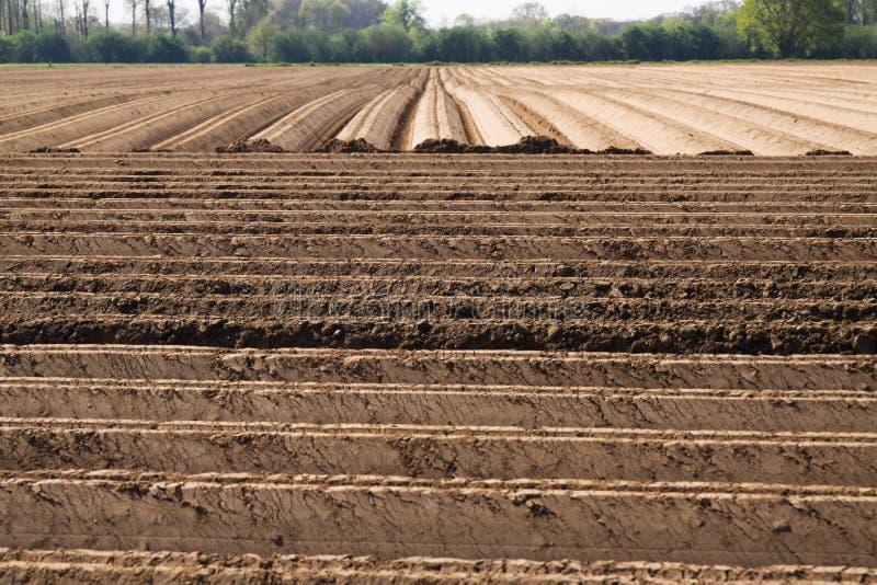 Sikt på plogad brukad cropland med symmetriska vertikala och horisontalfåror i Nederländerna nära Roermond royaltyfri foto