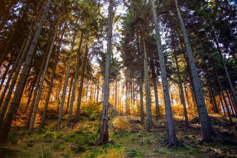 Sikt på skogen av södra Silesia royaltyfri bild