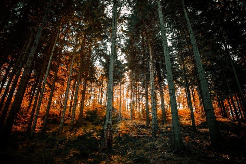 Sikt på skogen av södra Silesia royaltyfria bilder
